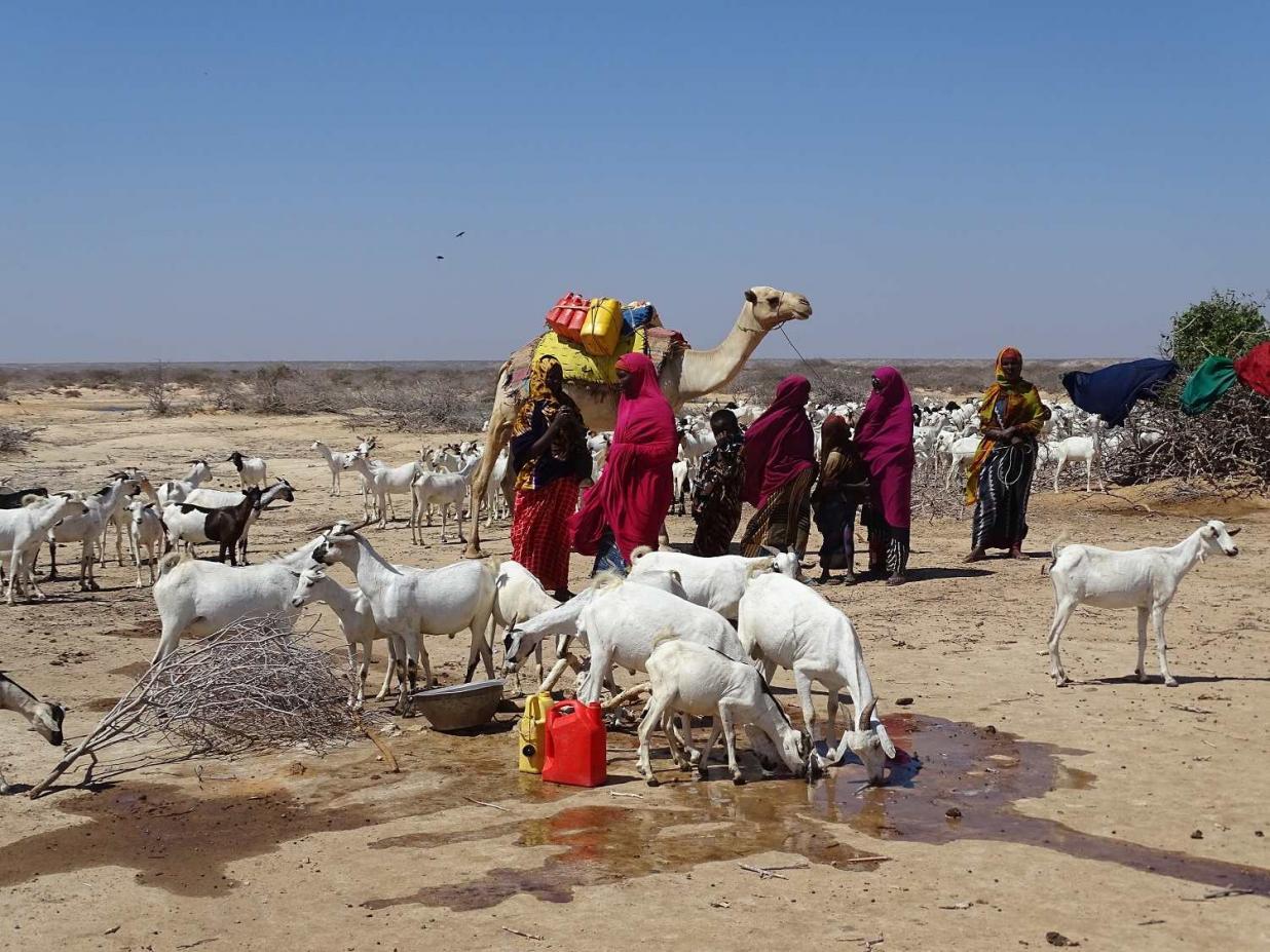 Die Diakonie Katastrophenhilfe ist derzeit unter anderem in Somalia tätig