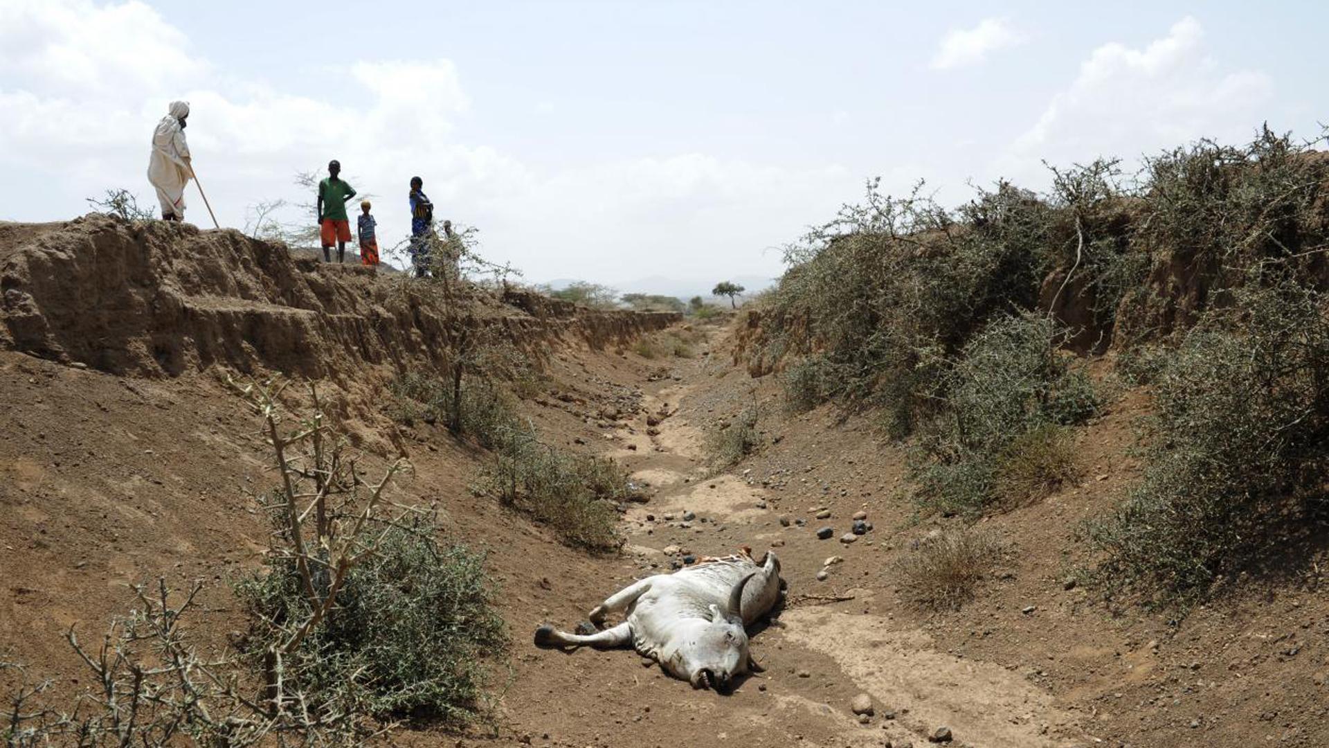 Tiere sterben, weil kein Wasser zur Verfügung steht