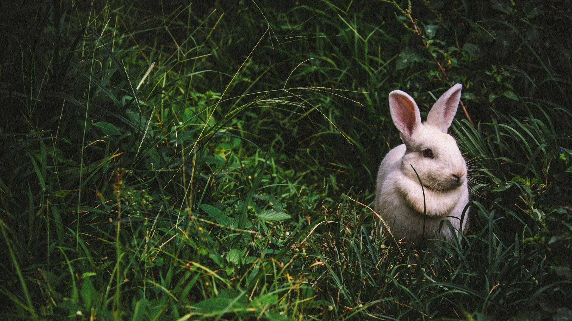 Der Hase hat sich als Symboltier für Ostern durchgesetzt. Theologisch gesehen ist das Lamm eigentlich das passendere Tier.