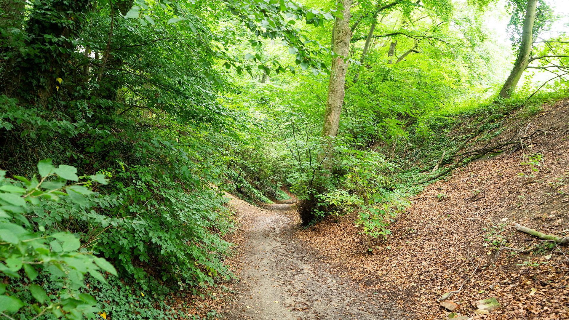 Ein jahrhundertealter Postweg schlängelt sich durch den Wald bis hinauf zur Kapelle