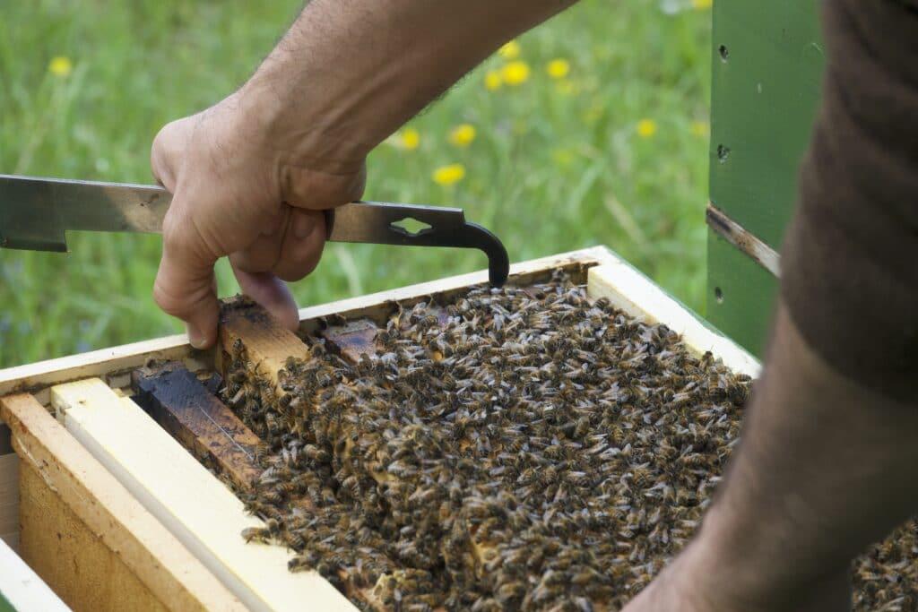Bienenstock, Wabe, Bienen, Honig, Imkerei