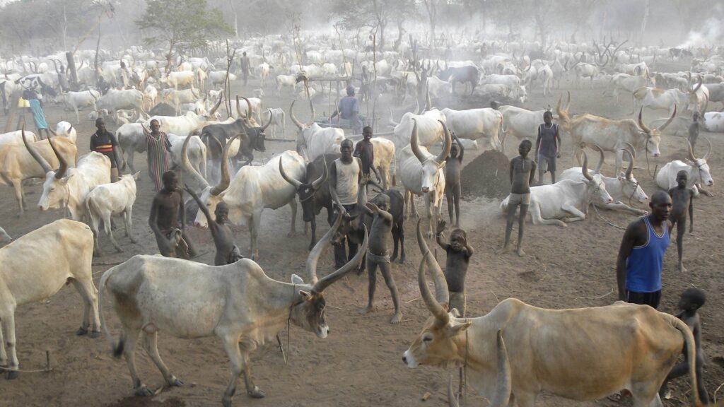 Rinderherde im Südsudan