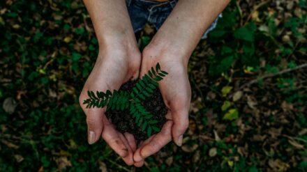 Eine Pflanze in einer Hand