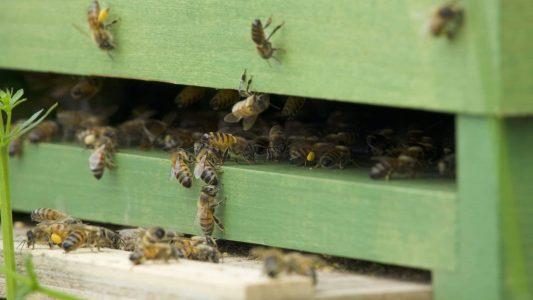 Bienen, Bienenstock, Honig